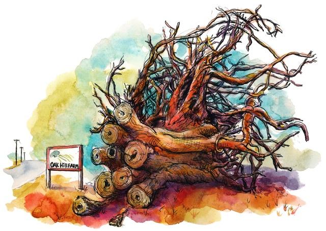 Oak-Hill-farm-tree-roots_s